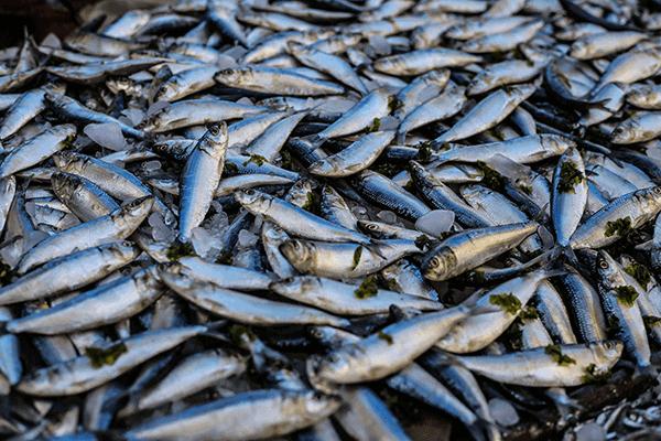 seafood-600x400